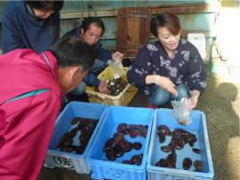 「地域の潤い」を実現した成功事例~「鳥羽の台所つまみ食いツアー」